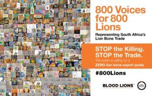 Blood-Lions-800Lions-Billboard